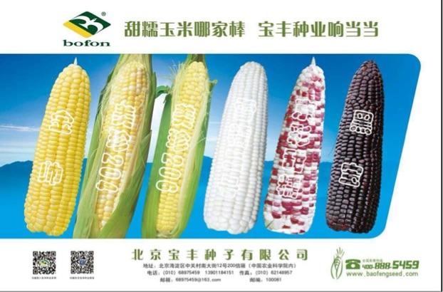 北京宝丰种子